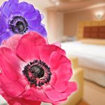 カップルズラブホテルグレイス201号室 アネモネ